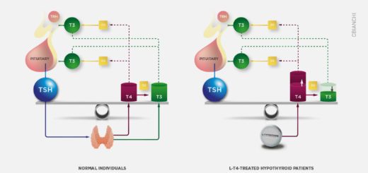 The thyroid axis is wired to preserve and defend circulating T3